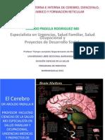 Cerebro, Limbico y Diencefalo 2