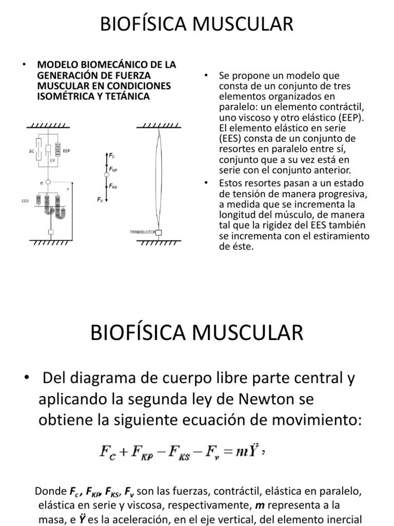 Lujoso Muscular En Diagrama De Cuerpo Galería - Imágenes de Anatomía ...