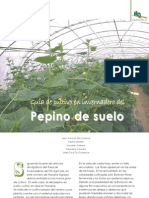 Cultivo Pepino