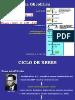 Aula Ciclo de Krebs