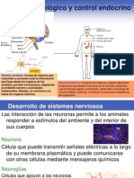 Control neurológico y control endocrino