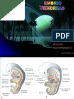Embrio Pancreas