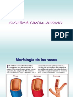 8.- Sistema Circulatorio