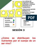 CIRCULACIÓN Y SISTEMA CIRCULATORIO2