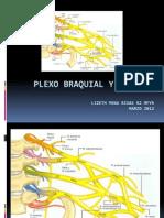1.2 Plexto Braquial y Sus Nervios