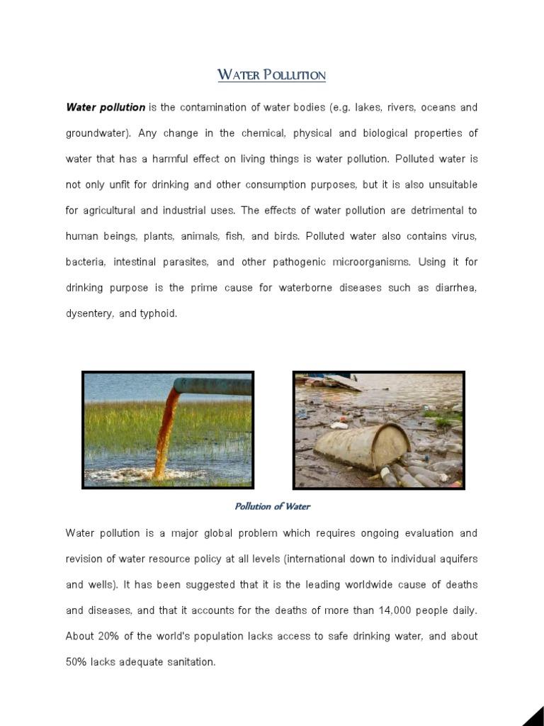 brief essay on birds