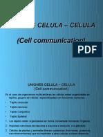 UNIONES_CELULA
