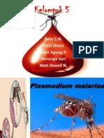 Presentasi Plasmodium Malariae