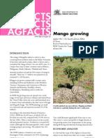Mango Growing