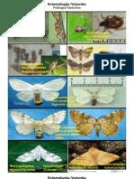 Entomologija-Vocarska