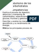 Medicina Metabolismo de Los Carbohidratos