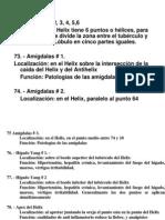 Auriculo 2