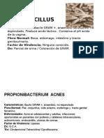 Bacilos GRAM+