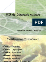 diaphania-nitidalis