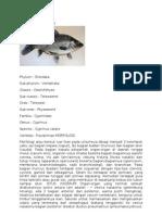 Klasifikasi Ikan Mas