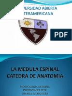 la-medula-espinal-1220386086259183-8