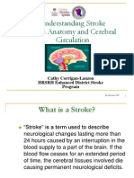 Understanding Stroke-Brain Anatomy and Cerebral Circulation
