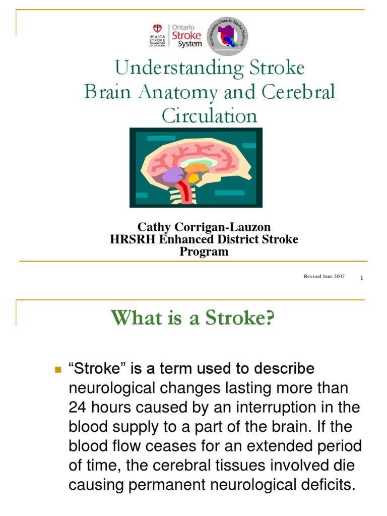Understanding Stroke Brain Anatomy And Cerebral Circulation Stroke
