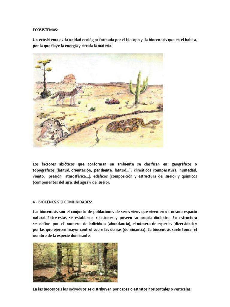 Eco Sistem As Ecología Ecosistema