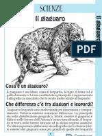 giaguaro[1]