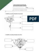Guía Cs Nat Ciclo plantas con flores