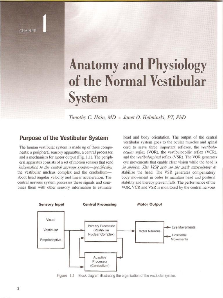 AnatoFisio Vestibular   Vestibular System   Cerebellum