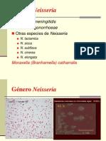 Tema 20. Diapositivas. Genero Neisseria