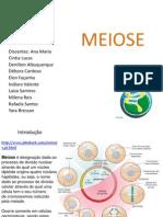 meiose genetica