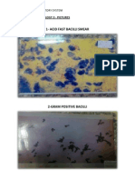 Practical Microbiology 3- Pictures
