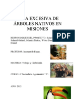 TALA EXCESIVA DE ÁRBOLES NATIVOS EN MISIONES