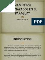 Mamiferos Amenazados en El Paraguay