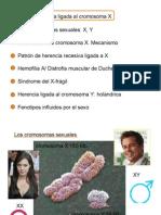 Herencia de Cromosomas