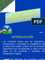movilidad y  velocidad de absorción de nutrientes