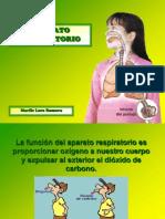aparato-respiratorio-52270-14860