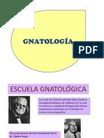 gnatologia