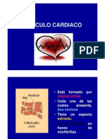 musculo-cardiaco