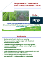 Nutrient Management in CA - ML Jat