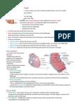 Cardiovascular System- Heart Intro