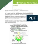 Actividad Funcionamiento Sinapsis Muscular Ficha 20