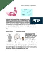 Desarrollo embrionariofunción de las hormonas en el comportamiento