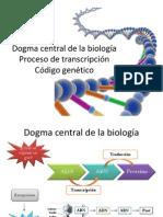 Dogma Central Transcripcion CG III Lapso