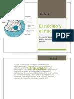 El núcleo y el nucléolo