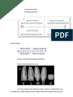 Resumo Prática de Anatomia Dental