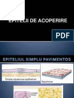 Lp1 Epitelii de Acoperire