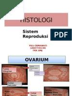 Slide Histologi Repro Yuli