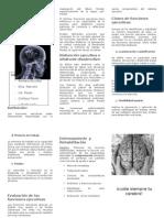Neuropsicología de los problemas del aprendizaje triptico