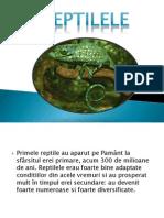 Reptile - Animale Vertebrate