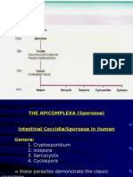 Intestinal Coccidia - Sarcocystis