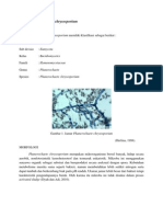 Jamur Phanerochaete chrysosporium
