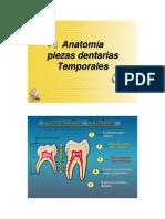 Anatom_a Piezas Temporales